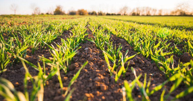Fagseminar: Biokull i landbruket