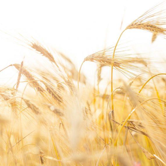 Et skritt mot klimanøytralt landbruk – Partnerskapsmøte Norge